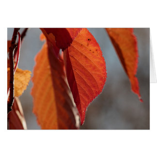 Fall Cherry Leaf Greeting Card