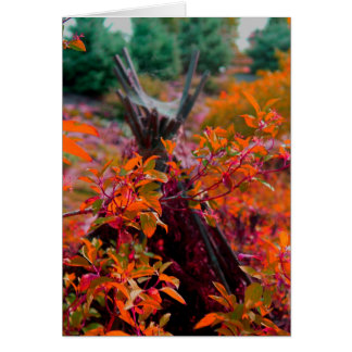 Fall collection note card
