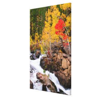 Fall color along Bishop Creek, CA Canvas Print