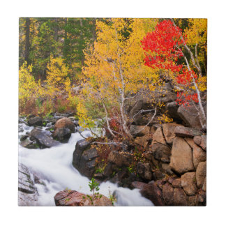 Fall color along Bishop Creek, CA Ceramic Tile