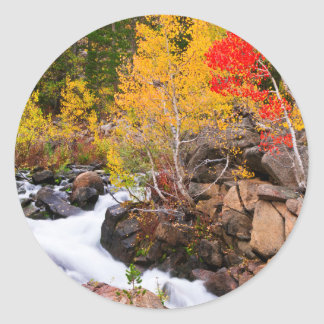 Fall color along Bishop Creek, CA Classic Round Sticker