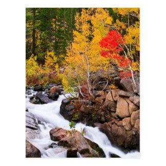 Fall color along Bishop Creek, CA Postcard
