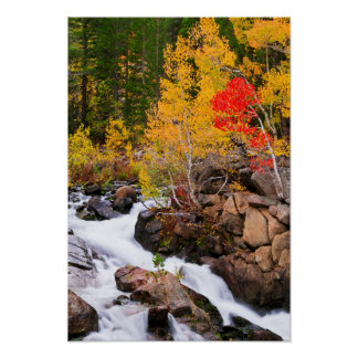 Fall color along Bishop Creek, CA Poster