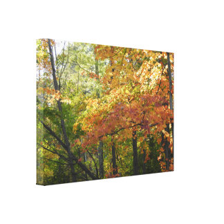 Fall Color / Autumn Leaves Canvas Print