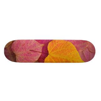 Fall color on Forest Pansy Redbud fallen Skate Decks