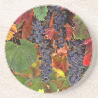 Fall Colored Wine Vineyard Sandstone Coasters
