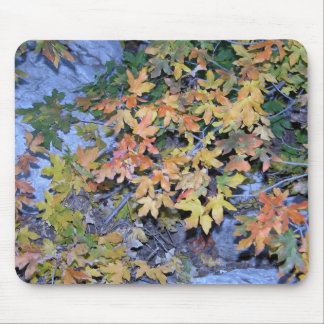 Fall Colors 1 Mouse Pad