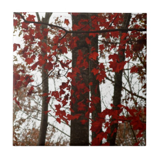 Fall Colors Autumn Trees Red Canadian Maple Leaves Small Square Tile