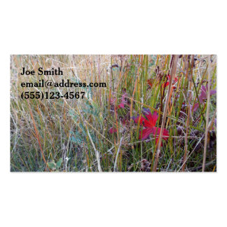 Fall Colors Close-up Pack Of Standard Business Cards