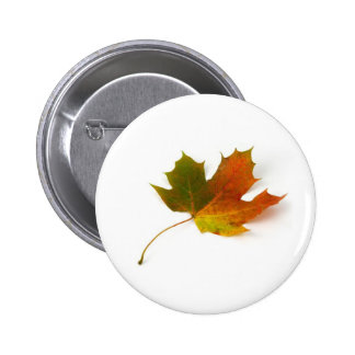Fall Colors Maple Leaf Pins
