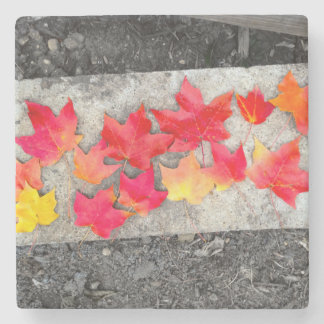Fall Colors Maple Leaves Thanksgiving Coaster Stone Coaster