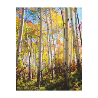 Fall colors of Aspen trees 5 Canvas Print