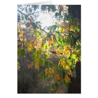 Fall Colour Card