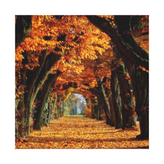 Fall  Country Road Canvas Print