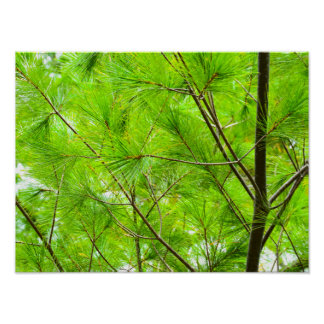 Fall Evergreen photo Poster