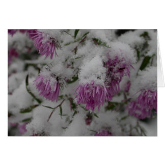 fall flowers - new england asters in snow card