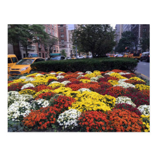 Fall Flowers & Yellow Taxis in New York City Postcard