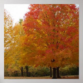 Fall Foliage 1 Print