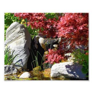 Fall foliage and pond print photograph