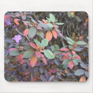 Fall Foliage Autumn Leaves Nature Tree Photography Mouse Pad