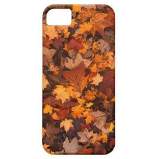 Fall-foliage Barely There iPhone 5 Case