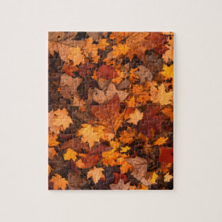 Fall-foliage Jigsaw Puzzle