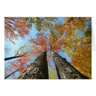 Fall foliage looking up 2 card
