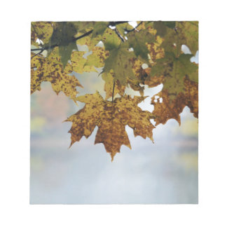 Fall Foliage Notepad