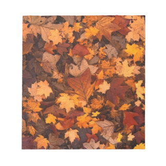 fall foliage notepads