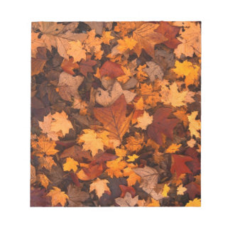 Fall-foliage Notepads