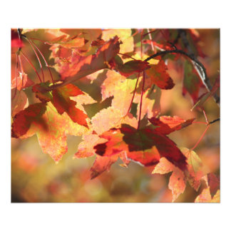 Fall foliage photo print