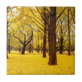 Fall forest scenery ceramic tile