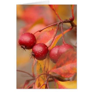 Fall Harvest card