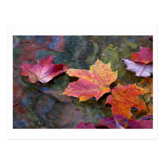 fall in line postcard