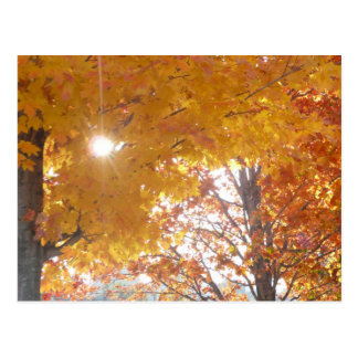 Fall in Montreal Postcard
