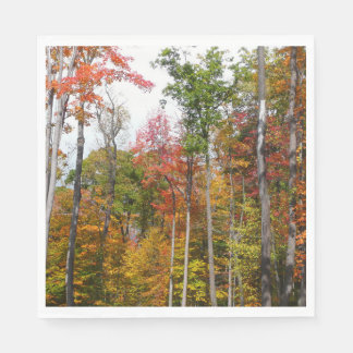 Fall in the Forest Colorful Autumn Photography Paper Napkins