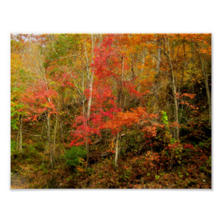 Fall In The Smoky Mountains Poster
