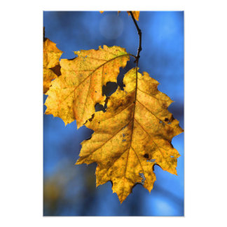 Fall Leaf 2016 2 Photo Print