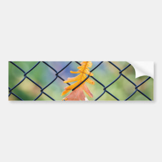 Fall Leaf Caught on a Fence Bumper Sticker