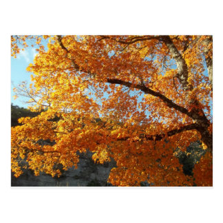 Fall leave note cards, magnets computer skins postcard