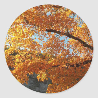 Fall leave note cards, magnets computer skins round sticker