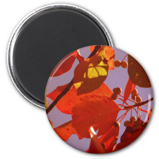 Fall Leaves 6 Cm Round Magnet