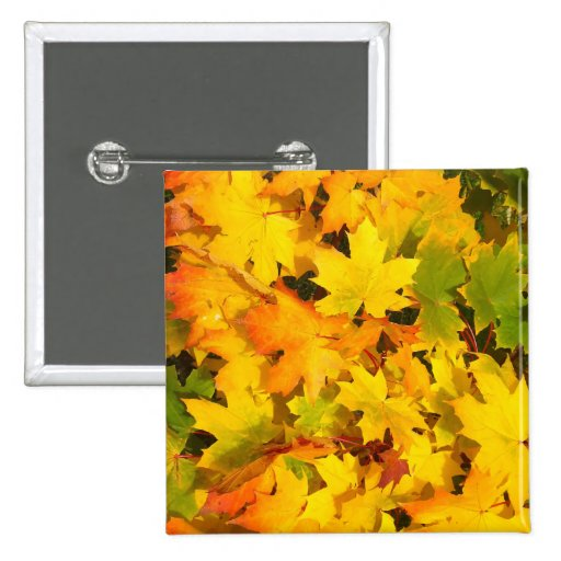 Fall Leaves Autumn Colors Leaf Design Pinback Buttons