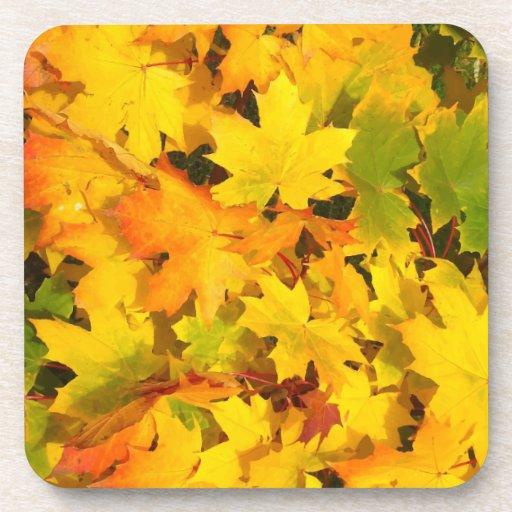 Fall Leaves Autumn Colors Leaf Design Coaster