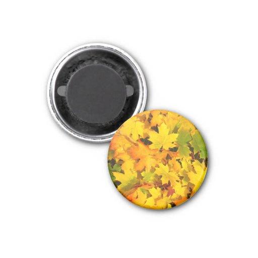 Fall Leaves Autumn Colors Leaf Design Magnets