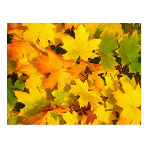 Fall Leaves Autumn Colors Leaf Design Postcards