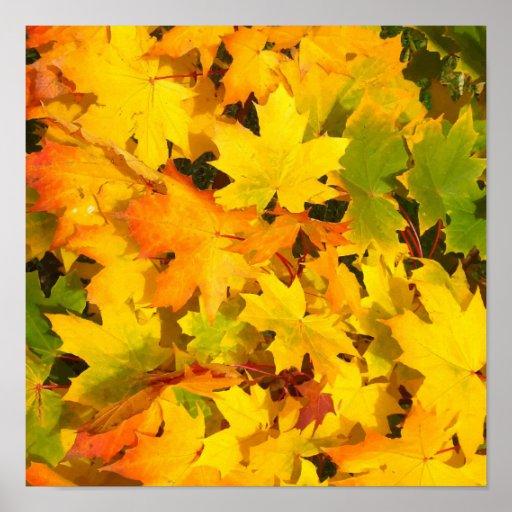 Fall Leaves Autumn Colors Leaf Design Print