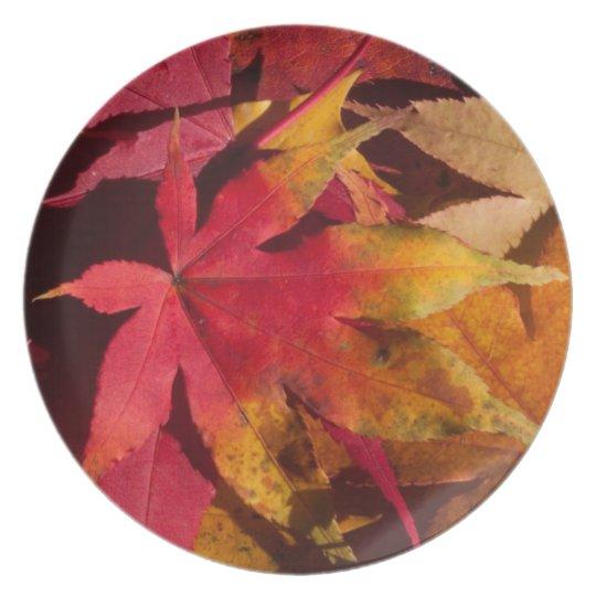 Fall leaves, autumn colours custom melamine plate