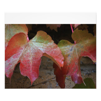 Fall Leave's on a Vine close up Photo Enlargement
