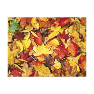 Fall leaves photo on art prints and canvas's stretched canvas print